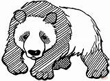 Panda Coloring Pages Bear Giant Printable Realistic Adults Drawing Line Worksheets Pandas Clipart Bears Mammals Animals Chinese Getdrawings Da Colorare sketch template