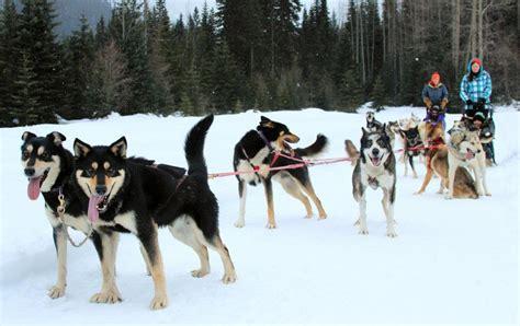 Dog Sledding Jasper - Banff - Alberta   Cold Fire Creek ...