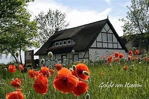 Haus Mit Büroanbau : haus im mohn foto bild landschaft kulturlandschaften natur bilder auf fotocommunity ~ Markanthonyermac.com Haus und Dekorationen