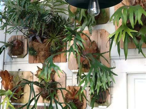 Porch Daniel Nolan by My Living Wall Of Mounted Staghorn Ferns Eclectic