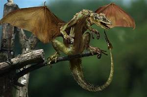 real dragons found alive - Google Search | dragons ...