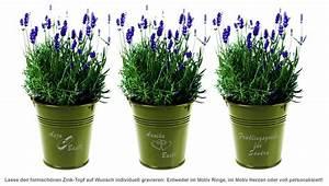 Lavendel Pflanzen Im Topf : lavendel im zink topf mediterranes flair zum verschenken ~ Frokenaadalensverden.com Haus und Dekorationen