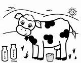 Cow Coloring Milk Cows Printable Dairy Drawing Colouring Healthy Produce Adults Cattle Moo Says Getcolorings Looking Getdrawings Alphabet Clipartmag Play sketch template