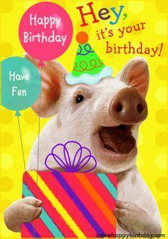 birthdaygreetingswithpiganimals cards birthday