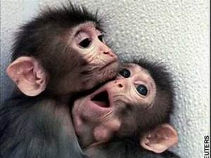 Cute Baby Monkeys!!!! - YouTube