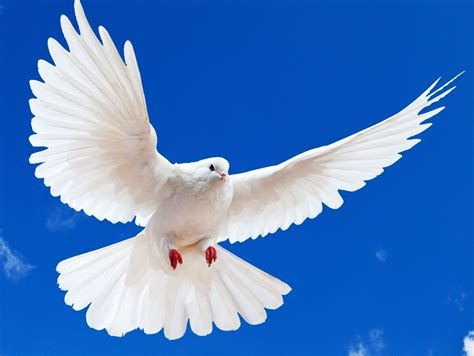 flying bird clipart image cute little cartoon soaring