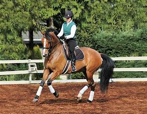Routines for a Balanced, Engaged Horse   Horse Journals