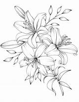 Pdf Flower Tattoo Drawing Coloring Flowers Pages Printable Blumen Botanicum Digital Adult Bouquet Lilies Lily Drawings Line Pencil Sketches Tattoos sketch template
