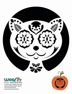 10, Free, Pumpkin, Stencils, For, Halloween, Cat, Lovers