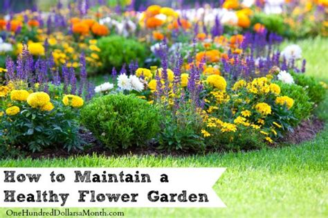 how to maintain a healthy flower garden one hundred