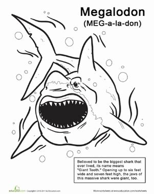 Color The Monstrous Megalodon  Worksheet Educationcom