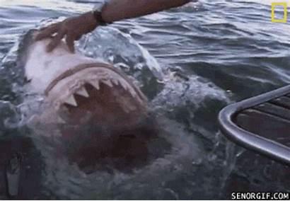 Shark Eaten Week Facts Gifs Don Dont