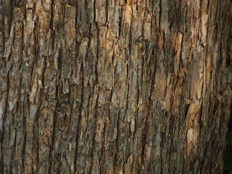 tree bark texture bark texture free stock photo public domain pictures