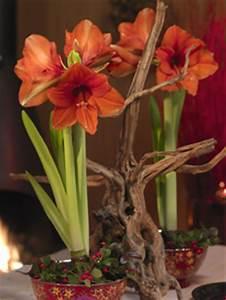 Blumen Zu Weihnachten : amaryllis und begonien als geschenk zu weihnachten blumen schenken ~ Eleganceandgraceweddings.com Haus und Dekorationen