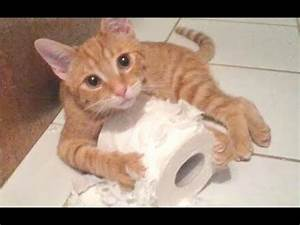 Funny Cats And Dogs Vs Toilet Paper Compilation 2014 [NEW ...  Funny