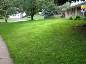 Crabgrass Lawn Grasses Photos