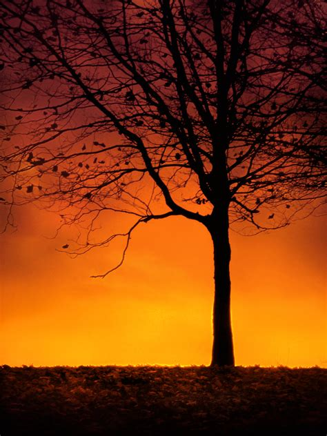 tree silhouette at sunset by jenny4 on deviantart
