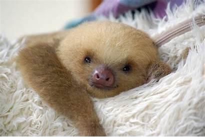 Sloth Sloths Babies Cat Medusa Animals Smiling