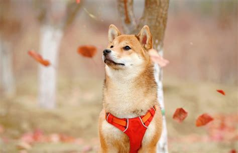 Dogecoin Price Up / Dogecoin Price Moves Up Slightly As ...