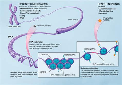 analyzing  epigenetic marks dna methylation