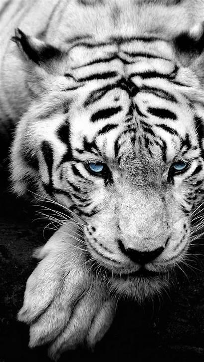 Iphone Animal Tiger Phone Wallpapers Amazing Desktop