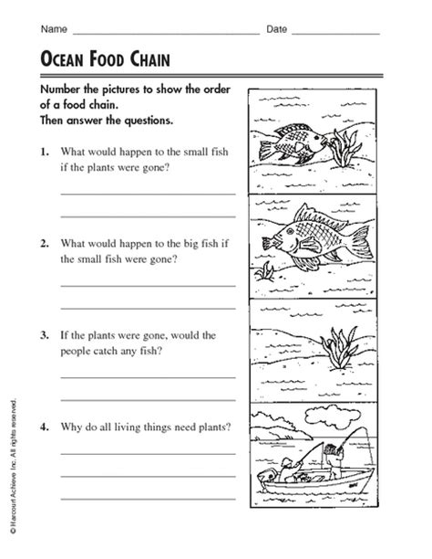 Ocean Food Chain Worksheet For 2nd  4th Grade  Lesson Planet