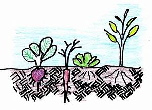 Intercropping-friends Helping Friends