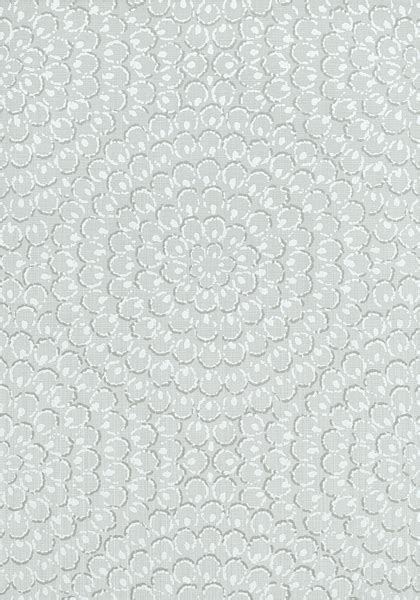 aster grey  collection surface resource  thibaut