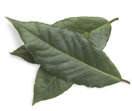 bay leaf replacement substitute for bay leaf in adobo theleaf co
