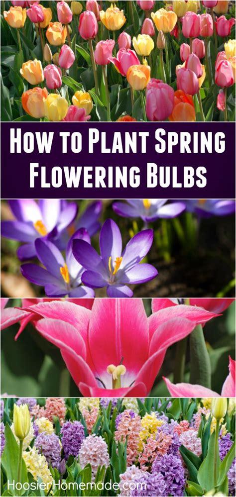 how to plant flowering bulbs hoosier