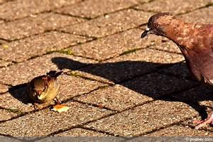 Kleine Vögel Im Garten : darf man v gel mit brot f ttern was hilft was schadet ~ Lizthompson.info Haus und Dekorationen