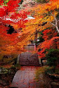 Autumn Leaves Fall Scenery