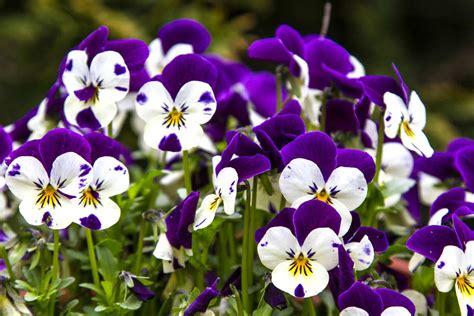 arredare il terrazzo con le piante come arredare il balcone con i fiori non sprecare