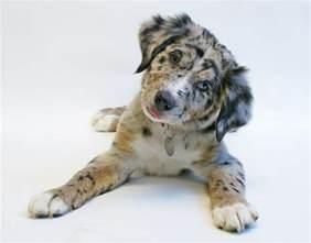 Mutt Dog Breeds