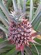 種植的道理。彰化二水鄉-山粉圓農茆木聰先生(2/2)@也樂商號|PChome 個人新聞台