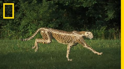 science   cheetahs speed youtube
