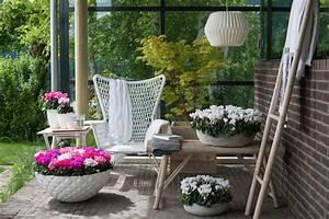 Alpenveilchen Im Garten : entspannung mit dem alpenveilchen pflanzenfreude ~ Orissabook.com Haus und Dekorationen