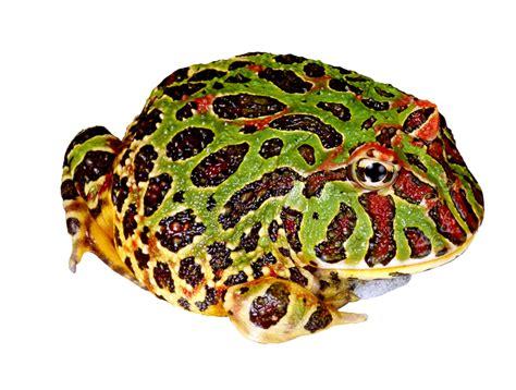 Frog Clip Frog Clip