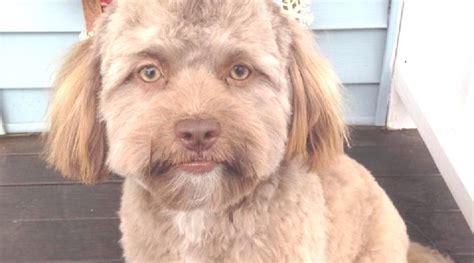 Manusia Kawin Dengan Anjing Video Bokep Ngentot
