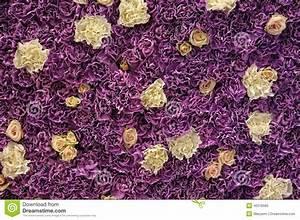 Mur De Fleurs : mur des fleurs fra ches photo stock image 40318565 ~ Farleysfitness.com Idées de Décoration