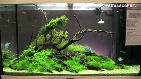 setup aquascape aquascaping aquarium ideas from aquatics live 2012 part
