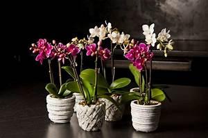 Come scegliere una pianta da regalare Inviafiori it