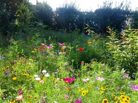 cuisine a vivre jardin sauvage graminées et sauge jardin sauvage