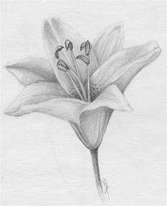 Daffodils & Daydreams: January 2012