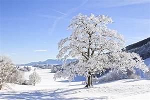 Gartenfest Im Winter : dorf tirol bei meran infos tipps f r ihren urlaub ~ Articles-book.com Haus und Dekorationen