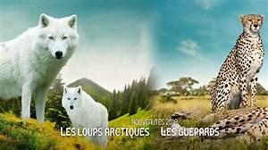 Billet Zoo De Beauval Leclerc : billets pour le zooparc de beauval visite du zoo de beauval ticketeaser ~ Medecine-chirurgie-esthetiques.com Avis de Voitures