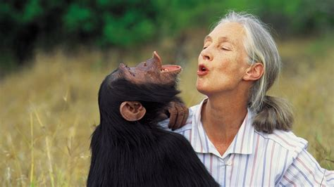 Introducing the Jane Goodall Collection - G Adventures