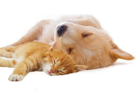 Sleep And Pets by Why Is Sleep Important To Growing Children The Sit N