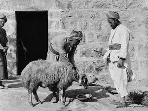 BiblePlaces Blog: Picture of the Week: Sheep with Tails