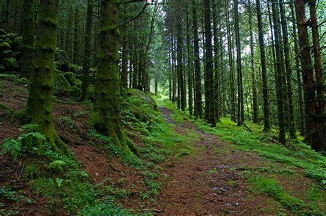 file in the green forest 5987640157 jpg wikimedia file in the green forest 5987640157 jpg wikimedia